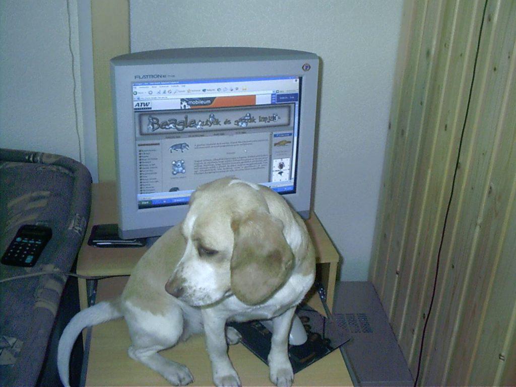 Beigli és a saját weboldala: Beagle Club Online