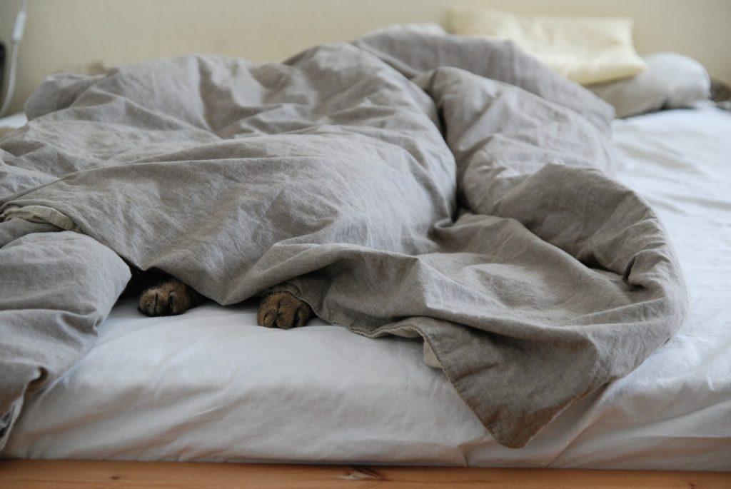 Kutya az ágyban