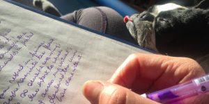 Kutyanapló írás